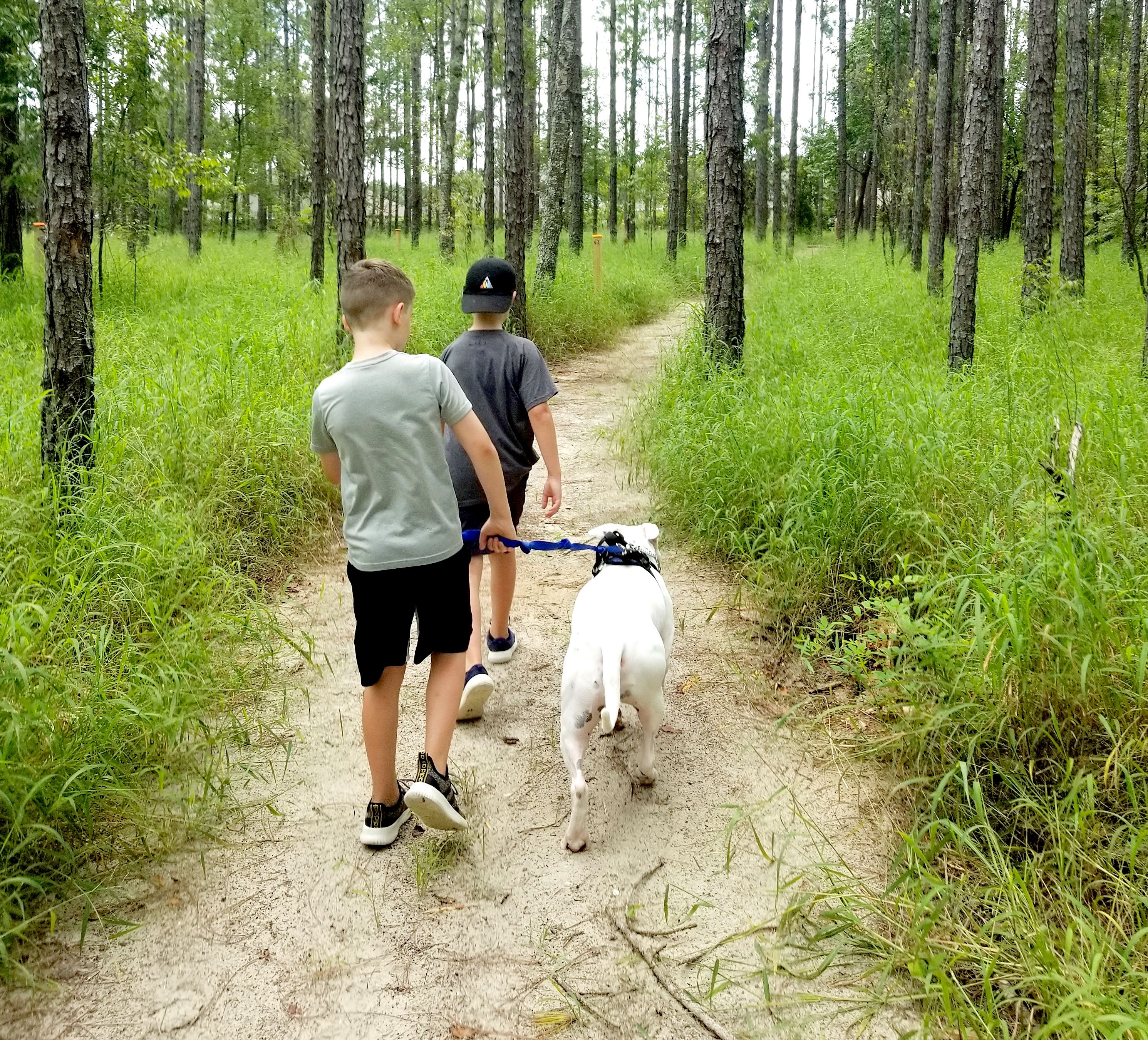 photo of two boys walking dog on leash on sandy trail path among trees